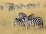 Ngorongoro & Serengeti