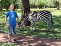 Zebra i hagen