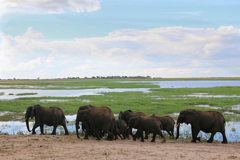 Elefanter ved Chobe River