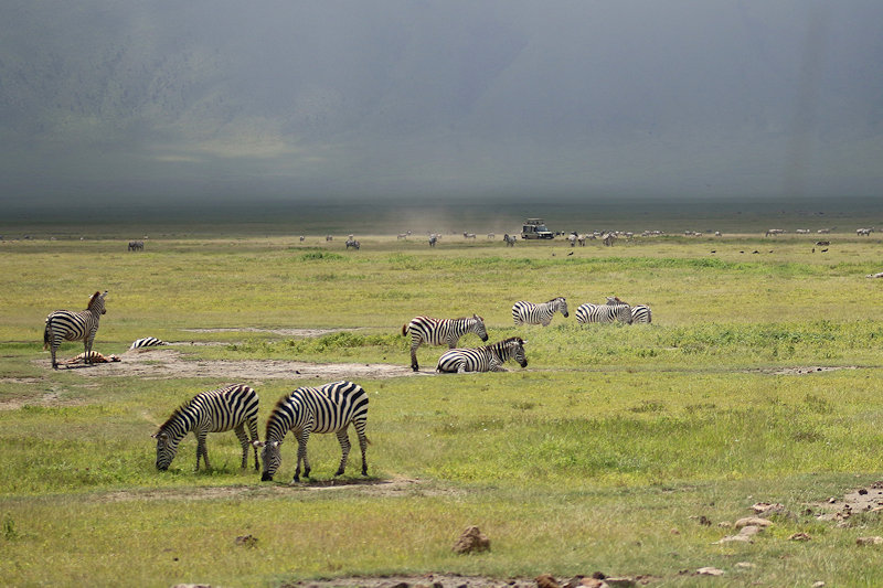 Ongorongoro
